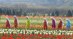 कश्मीर का ट्यूलिप गार्डन एशिया का सबसे बड़ा ट्यूलिप गार्डन
