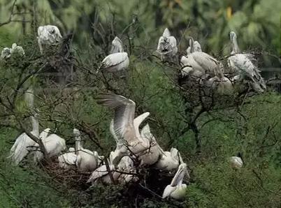 Okhla Bird Sanctuary Travel Guide