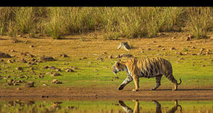Bandhavgarh National Park For Tigers And Safari