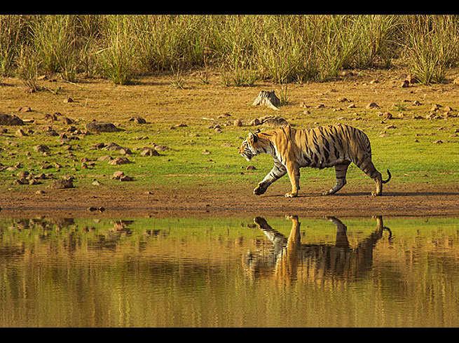 Bandhavgarh National Park For Tigers And Safari