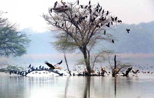 Sultanpur Bird Sanctuary, Gurgaon
