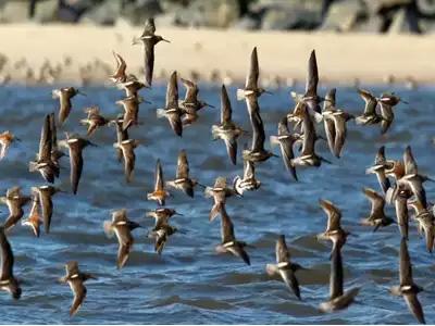 Okhla Birds