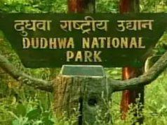 Wildlife Must Visit Dudhwa