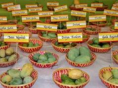 Mango Festival